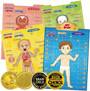 BEST LEARNING i-Poster My Body - Interactive Educational Human Anatomy Talking Game Toy System to Learn Body Parts