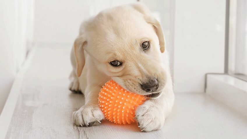 safe chew toys for dogs